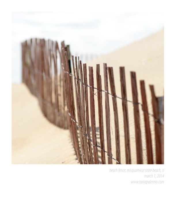 BeachFence1March2014©TaniaPalermo-0248