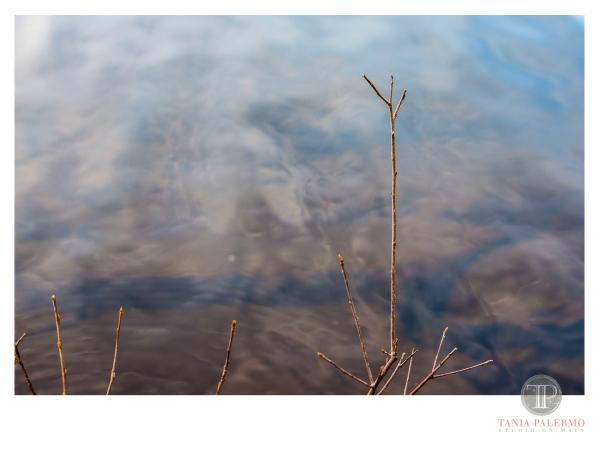 HP01©TANIAPALERMO2020