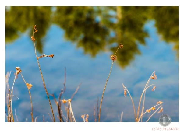 HP03©TANIAPALERMO2020
