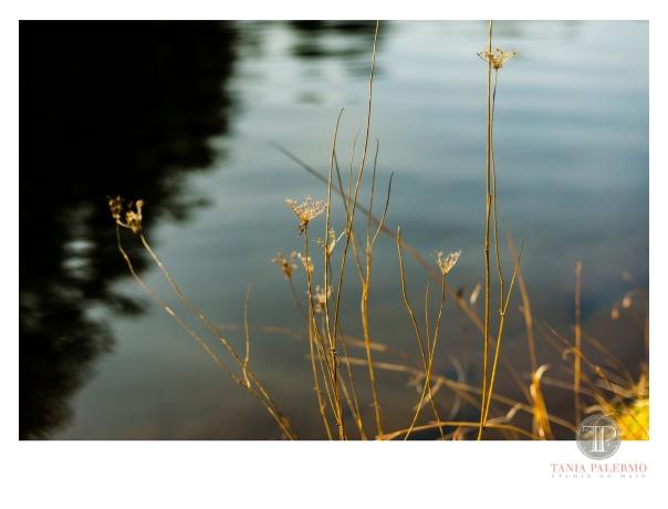 HP04©TANIAPALERMO2020