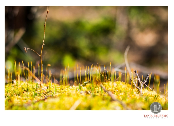MiniLandscape4-6-20fb©TaniaPalermo